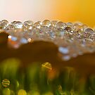drops on leaf by Manon Boily