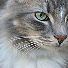 Grumpy Grey Cat by Amy Rawlings