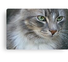 Grumpy Grey Cat Canvas Print