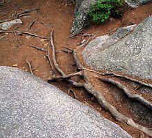 Roots by Lynda Lehmann
