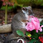 """Sachi"" Ringtail Possum by Amber  Williams"