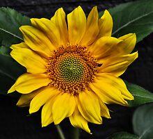 Little Miss Sunshine by Debra Fedchin