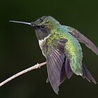 An Emerald Twist / Ruby Throated Hummingbird by Gary Fairhead
