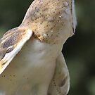 Profile of a Barn Owl by Featherbrush