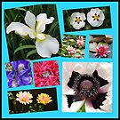 Irises and Poppies - Summer Flowers Collage by BlueMoonRose