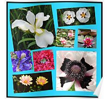 Irises and Poppies - Summer Flowers Collage Poster