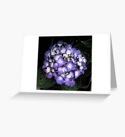 Hydrangea Ink Sketch Greeting Card