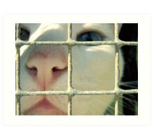 I'm innocent, the dog did it. Art Print