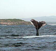 Tail flukes, mother whale #1 by Odille Esmonde-Morgan