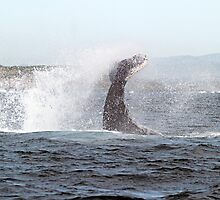 Tail flukes, mother whale #3 by Odille Esmonde-Morgan