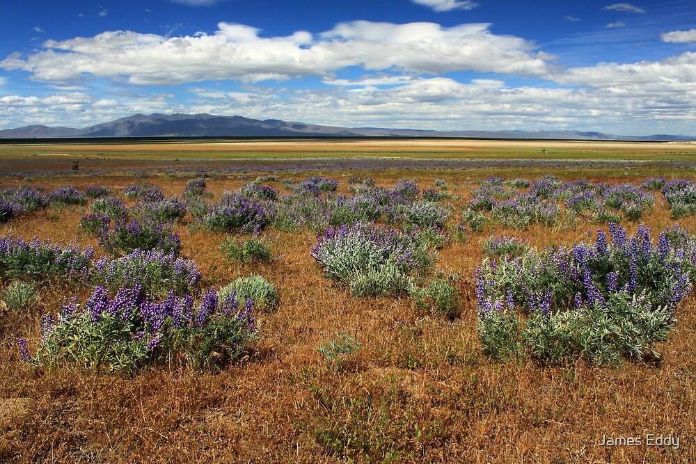 Springtime In Honey Lake Valley by James Eddy