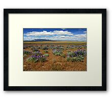 Springtime In Honey Lake Valley Framed Print