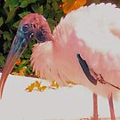 Wood stork getting refreshed by ♥⊱ B. Randi Bailey