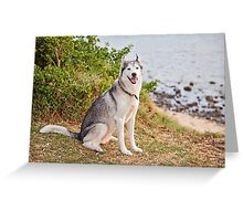 Husky at the Beach Greeting Card