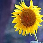 Giant Sun Flower Posing for a Portrait Shot by Corri Gryting Gutzman