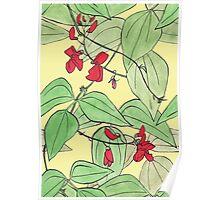 Scarlet runner beans Poster