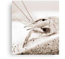 The Crayfish. Canvas Print
