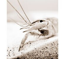 The Crayfish. Photographic Print