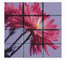 Window Panes by Jarede Schmetterer