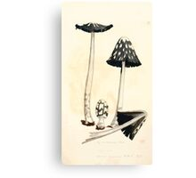 Coloured figures of English fungi or mushrooms James Sowerby 1809 0449 Canvas Print