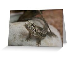 Here a little dragon! Cranbourne, Vic. Greeting Card