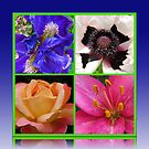 Peace Rose, Ruffled Poppy, Iris and Lily Collage by BlueMoonRose
