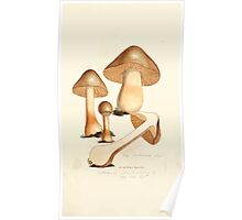 Coloured figures of English fungi or mushrooms James Sowerby 1809 0369 Poster