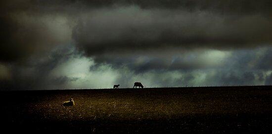 Dark 'n Stormy by Pene Stevens