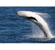 Breaching Humpback Whale Photographic Print
