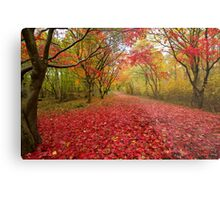 Alice holt forest ride Metal Print