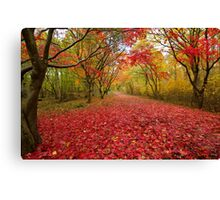Alice holt forest ride Canvas Print