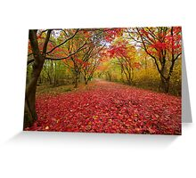 Alice holt forest ride Greeting Card