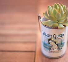 Succulent in a Can by Kate Mularczyk