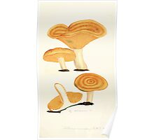 Coloured figures of English fungi or mushrooms James Sowerby 1809 0513 Poster
