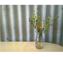 Rustic native flower arrangement Photographic Print