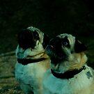 Two Pugs by sarahjayde