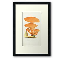 Coloured figures of English fungi or mushrooms James Sowerby 1809 0213 Framed Print