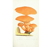 Coloured figures of English fungi or mushrooms James Sowerby 1809 0213 Photographic Print