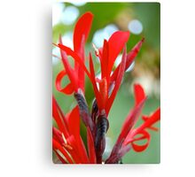 Soft Red Flowers Canvas Print