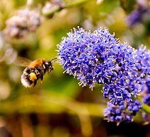 A spot of gardening by Ian Batterbee