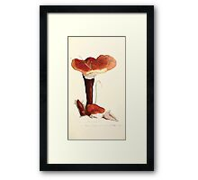 Coloured figures of English fungi or mushrooms James Sowerby 1809 0377 Framed Print