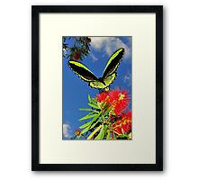 butterfly on bottle brush flower Framed Print
