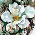 White Rose by Ann Mortimer