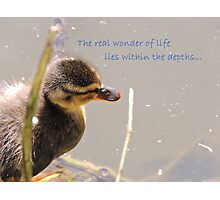 Within The Depths (Duckling)  Photographic Print