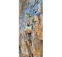 One thousand feet up-one thousand feet down, what's the diff?  Montana mountain goat photo. Photographic Print