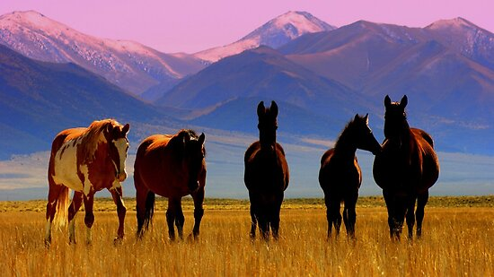 Loneliest Road In America Wild Horse Herd  by Jeanne  Nations
