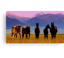 Loneliest Road In America Wild Horse Herd  Canvas Print