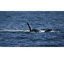 Southern Right Whale - Saying Hello Photographic Print