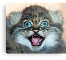 I may be small but these little teeth are still sharp!! Metal Print