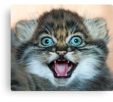 I may be small but these little teeth are still sharp!! Canvas Print